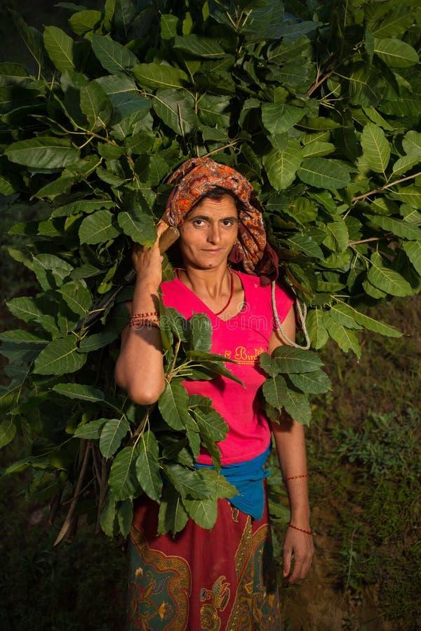 Mujer Nepali que cosecha, Doru, valle de Huwas, Nepal fotografía de archivo libre de regalías