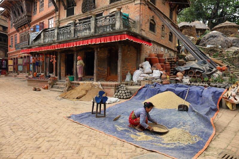 Mujer no identificada que trabaja con las cosechas en Bhaktapur, Nepal fotografía de archivo libre de regalías