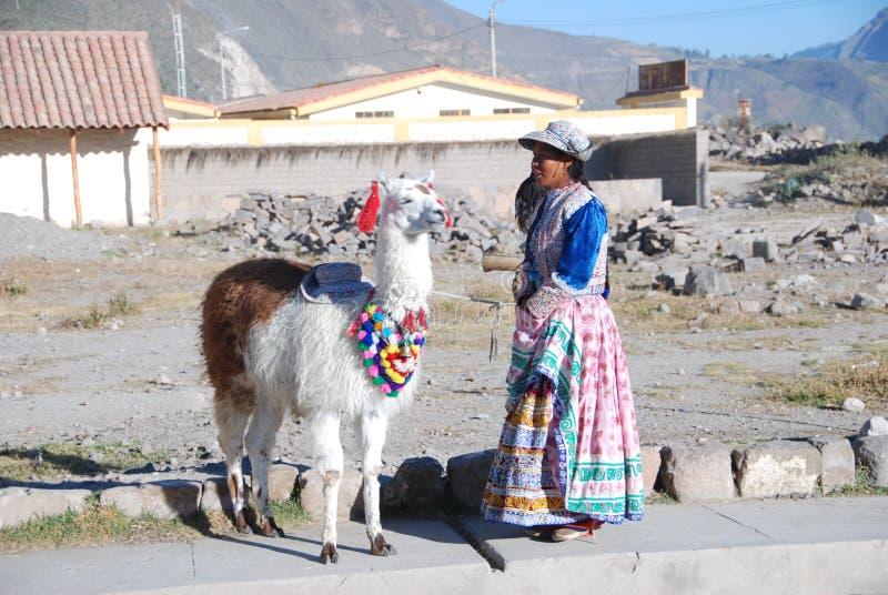 Mujer peruana de la indigencia con el lama foto de archivo