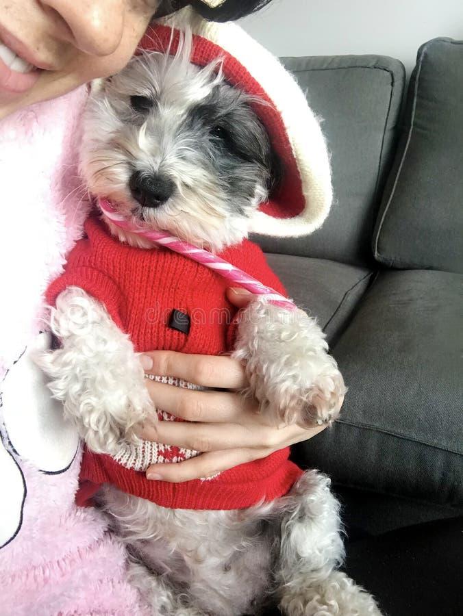 Mujer que abraza su perro con el suéter de la Navidad fotos de archivo