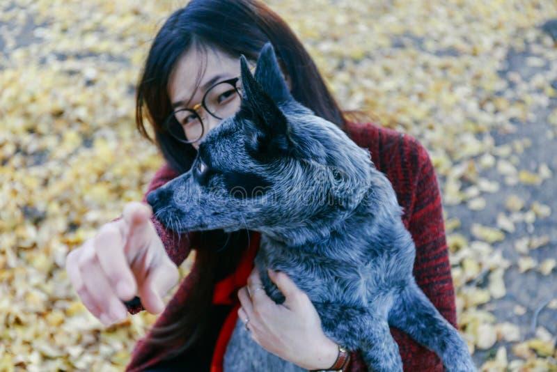 Mujer que abraza y que mira blando su perrito del australiano del animal doméstico foto de archivo libre de regalías