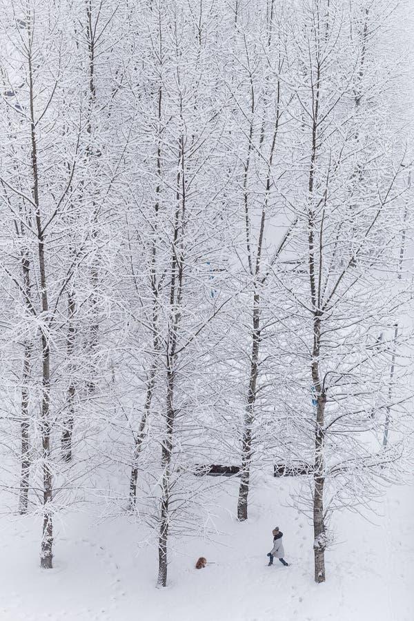 Mujer que camina con el perro en el parque nevoso Tiempo de la nieve en invierno foto de archivo libre de regalías