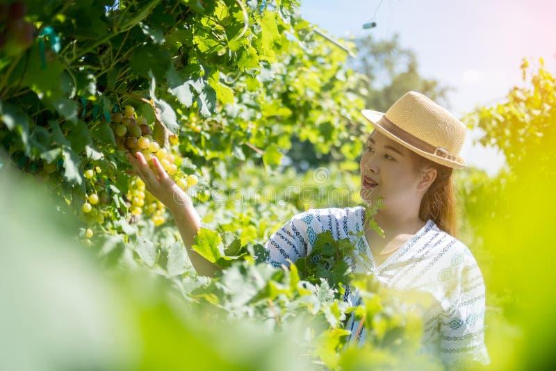 Mujer que cosecha las uvas en el jardín, hacia fuera puerta, retrato foto de archivo
