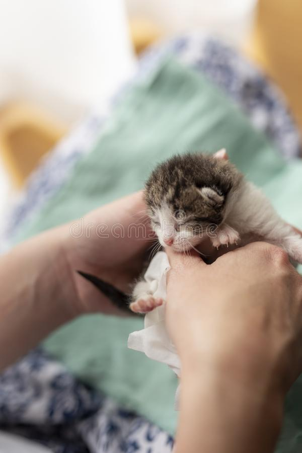 Mujer que da masajes al estómago de los gatitos fotografía de archivo libre de regalías