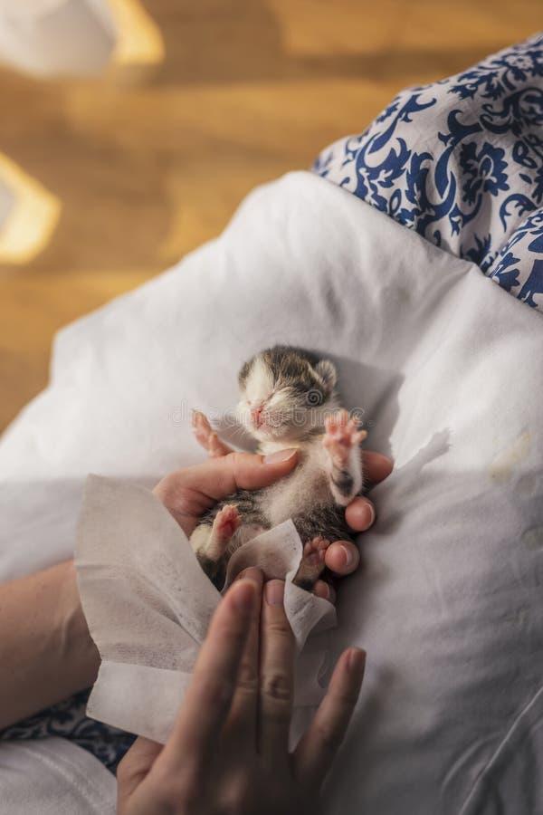 Mujer que da masajes al estómago del gato del bebé imagen de archivo libre de regalías