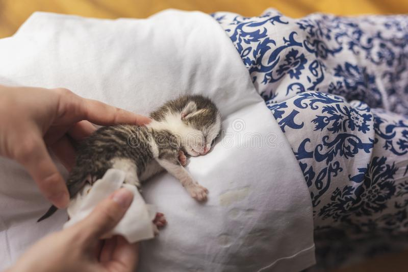 Mujer que da masajes al estómago del gato del bebé imagen de archivo