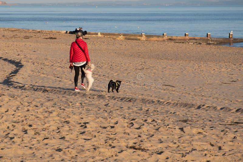 Mujer que disfruta del paseo en la playa con los perros en día brillante del otoño imagen de archivo libre de regalías