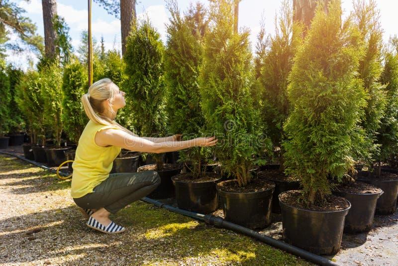 Mujer que elige el árbol conífero en el cuarto de niños al aire libre de la planta fotografía de archivo libre de regalías