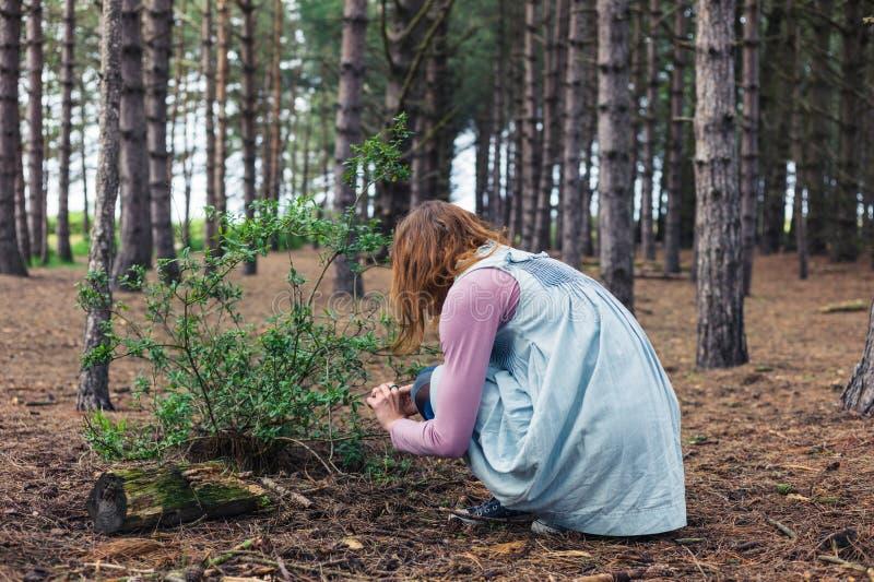 Mujer que forrajea en bosque imagenes de archivo