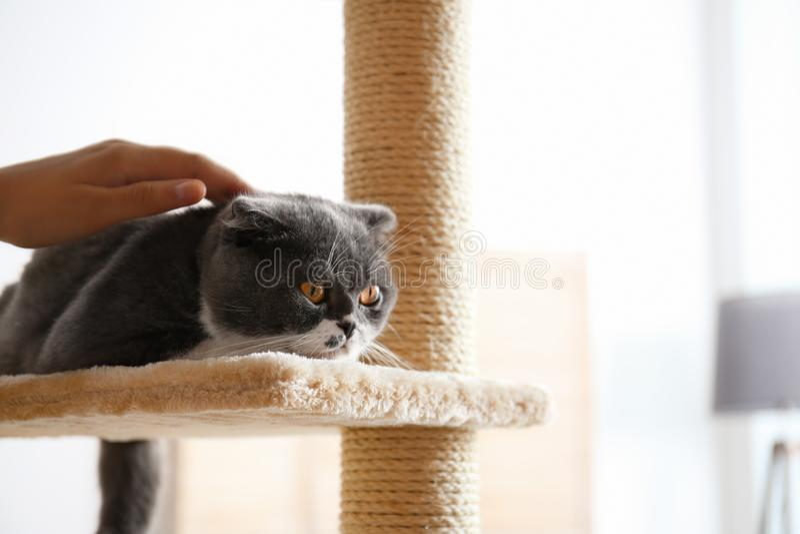 Mujer que frota ligeramente su gato en casa imágenes de archivo libres de regalías