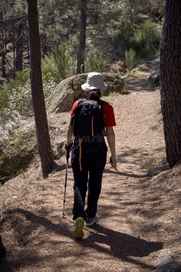 Mujer que hace el senderismo en naturaleza fotos de archivo
