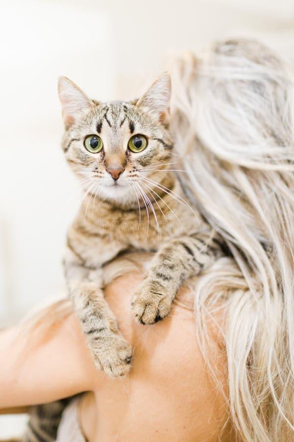 Mujer que juega con el gato casero - animal doméstico precioso imagenes de archivo