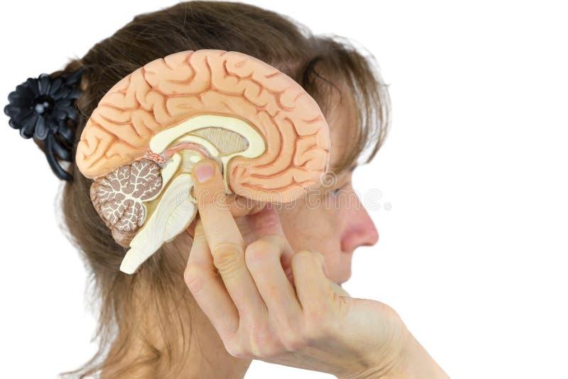 Mujer que lleva a cabo el modelo del hemisferio contra la cabeza en blanco fotografía de archivo libre de regalías
