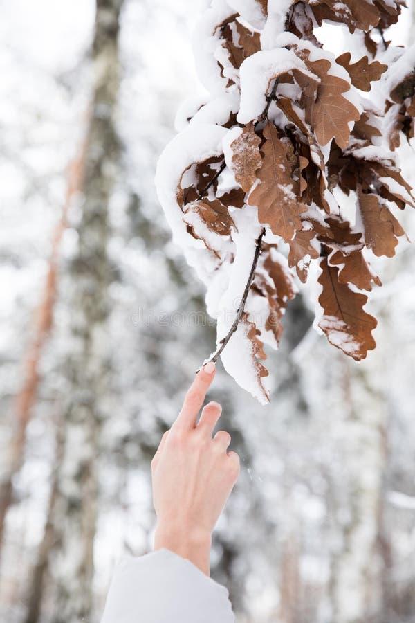 Mujer que lleva a cabo la rama con las hojas cubiertas con nieve en bosque foto de archivo