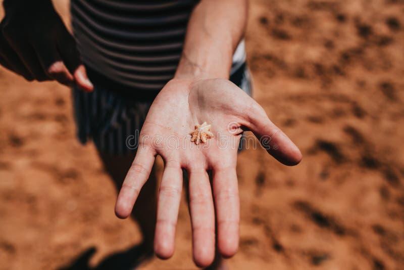 Mujer que lleva a cabo una pequeña cáscara en la mano en la línea de la costa fotografía de archivo libre de regalías