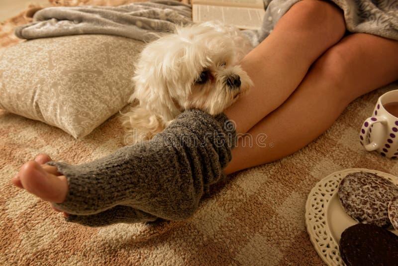Mujer que miente en cama con el perro imagen de archivo libre de regalías