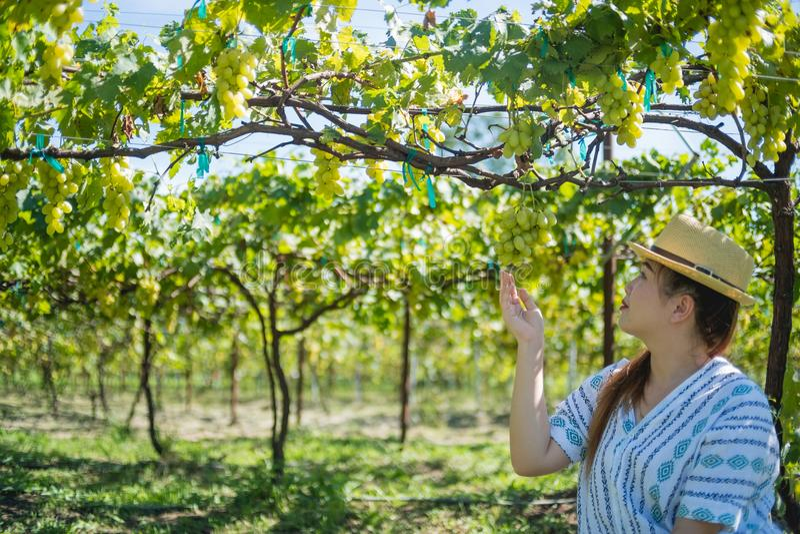 Mujer que mira la uva verde jugosa madura en el jardín fotos de archivo libres de regalías