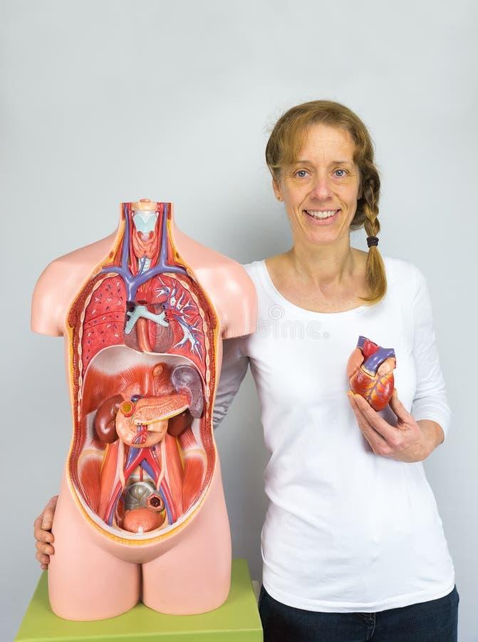 Mujer que muestra el modelo y el torso del corazón fotografía de archivo libre de regalías