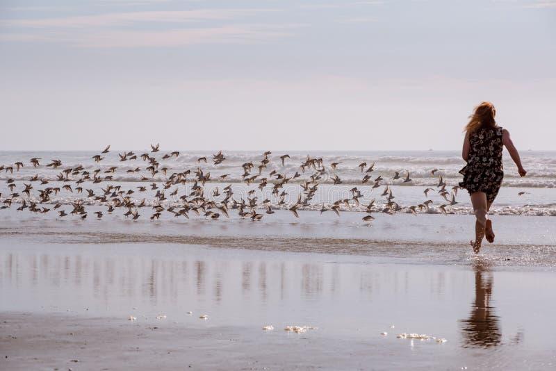 Mujer que persigue pájaros en la playa imagenes de archivo