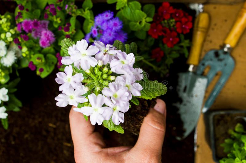 Mujer que planta las flores en la primera persona del suelo imágenes de archivo libres de regalías