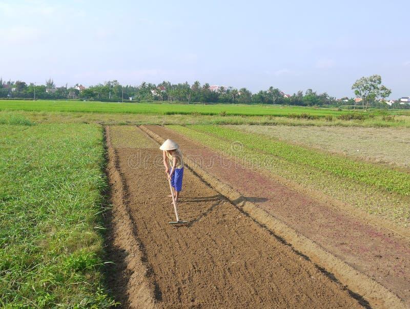 Mujer que rastrilla preparando el suelo en la madrugada vegetal del campo en Hoi An Vietnam fotografía de archivo