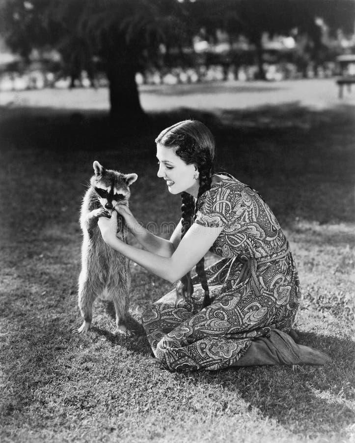 Mujer que se arrodilla en el césped que juega con un mapache doméstico (todas las personas representadas no son vivas más largo y imagen de archivo libre de regalías