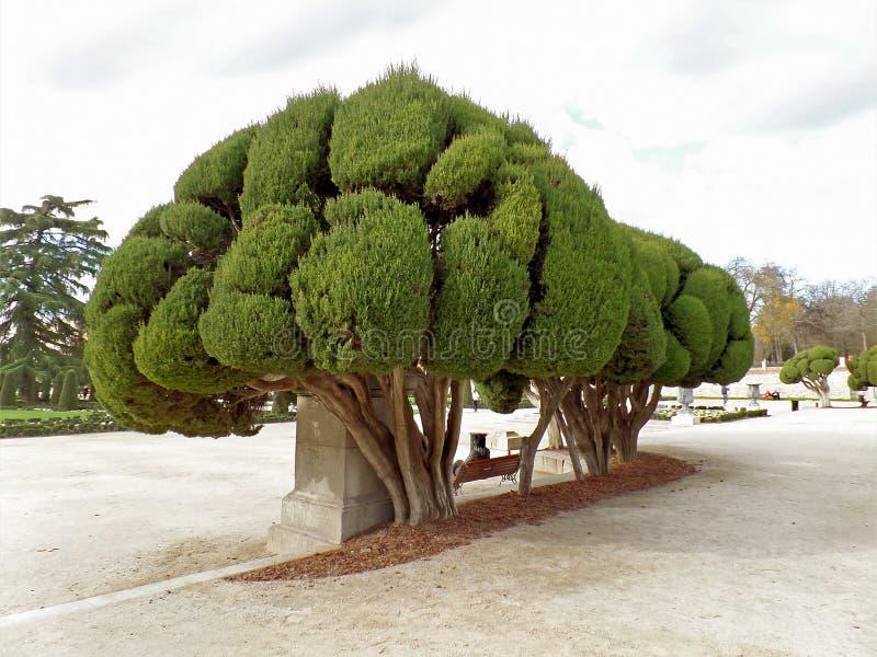 Mujer que se relaja debajo de los árboles impresionantes en Parque del Buen Retiro o parque del retratamiento agradable en Madrid imágenes de archivo libres de regalías
