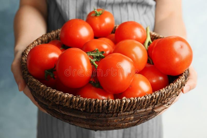 Mujer que sostiene el cuenco de mimbre con los tomates maduros foto de archivo libre de regalías
