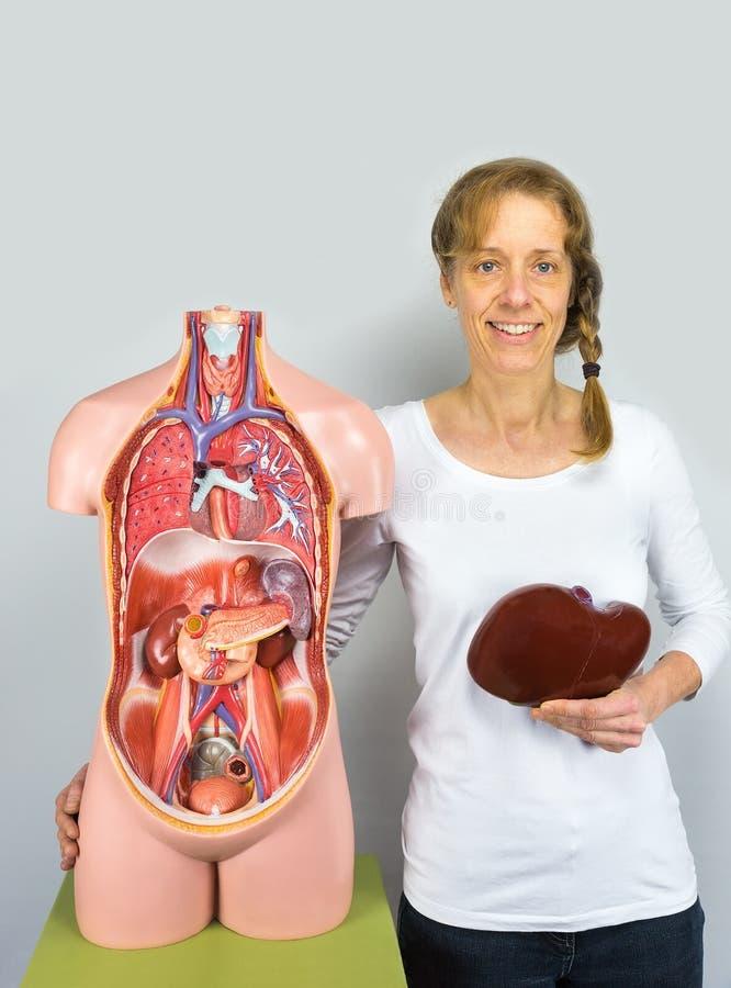 Mujer que sostiene el hígado en el cuerpo cerca del torso imagenes de archivo