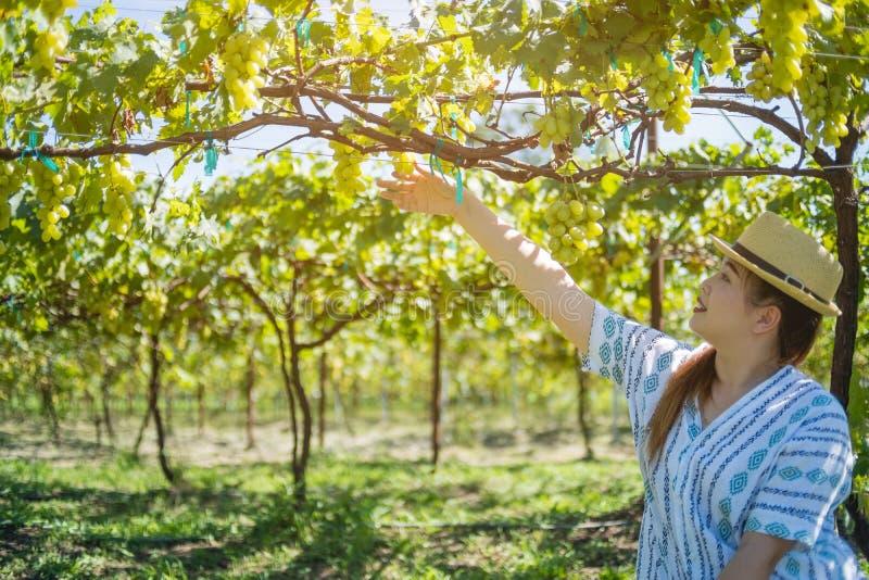 Mujer que sostiene las uvas verdes jugosas maduras en el jardín fotos de archivo