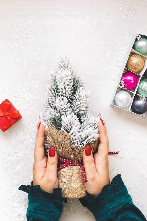Mujer que sostiene un pequeño árbol de navidad en manos imagenes de archivo