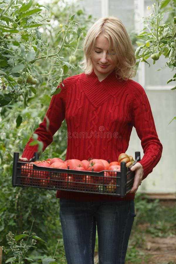 Mujer que sostiene una caja del tomate foto de archivo libre de regalías