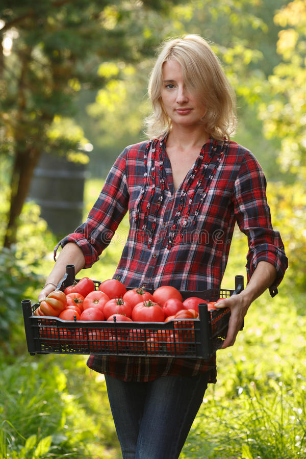 Mujer que sostiene una caja del tomate fotos de archivo