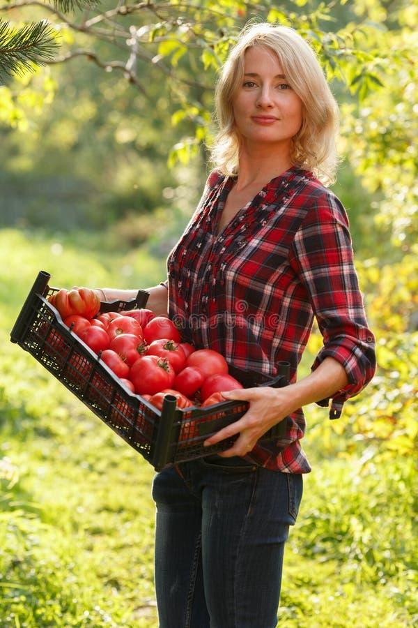 Mujer que sostiene una caja del tomate imagenes de archivo