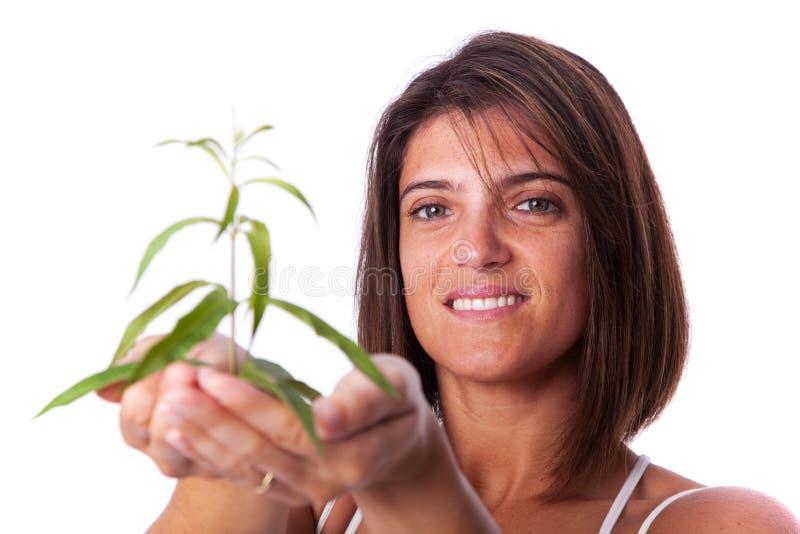 Mujer que sostiene una planta verde foto de archivo