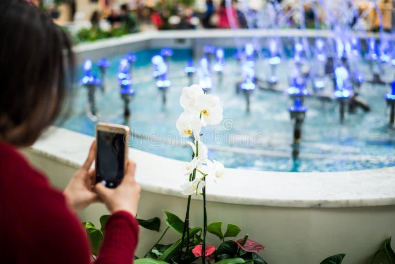 Mujer que toma la foto de la flor con el teléfono celular móvil fotografía de archivo libre de regalías