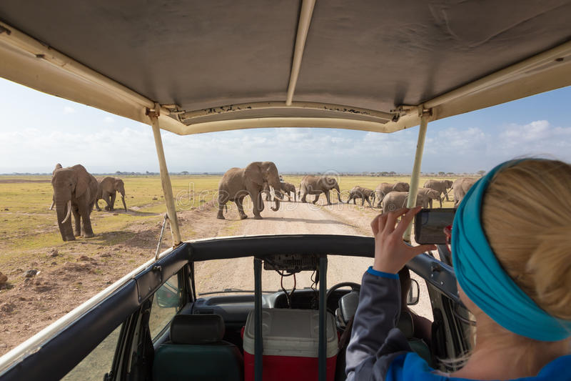 Mujer que toma las fotos en safari africano de la fauna Amboseli, Kenia foto de archivo