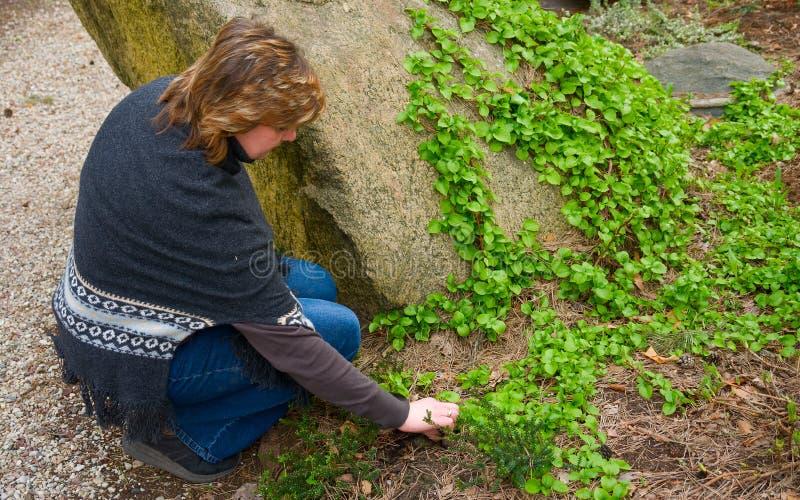 Mujer que trabaja en el jardín imágenes de archivo libres de regalías