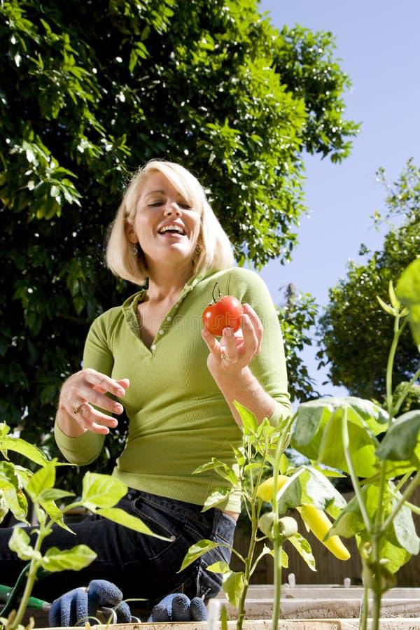 Mujer que trabaja en el jardín vegetal en patio trasero foto de archivo libre de regalías