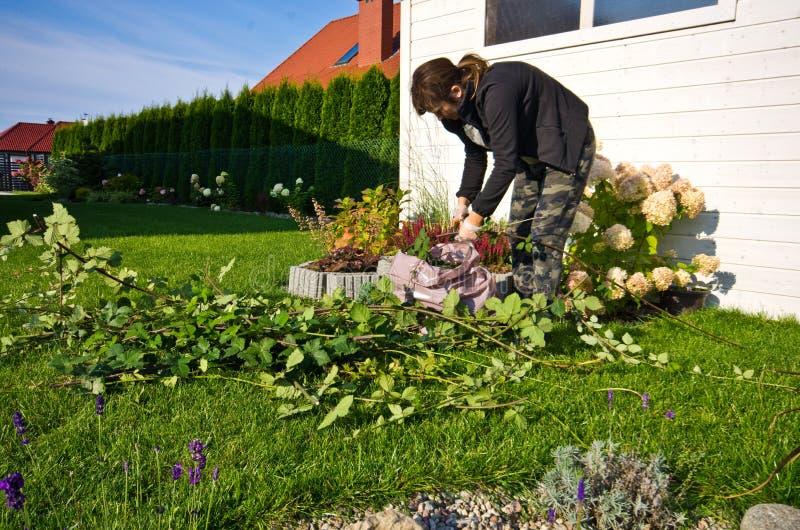 Mujer que trabaja en un jardín, cortando exceso de ramitas de plantas fotos de archivo libres de regalías