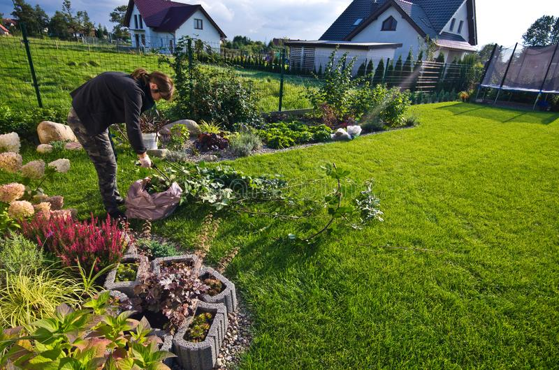 Mujer que trabaja en un jardín, cortando exceso de ramitas de plantas imagen de archivo libre de regalías