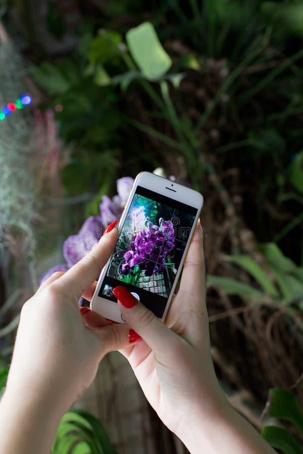 Mujer que usa un teléfono elegante para tomar una foto de flores imágenes de archivo libres de regalías