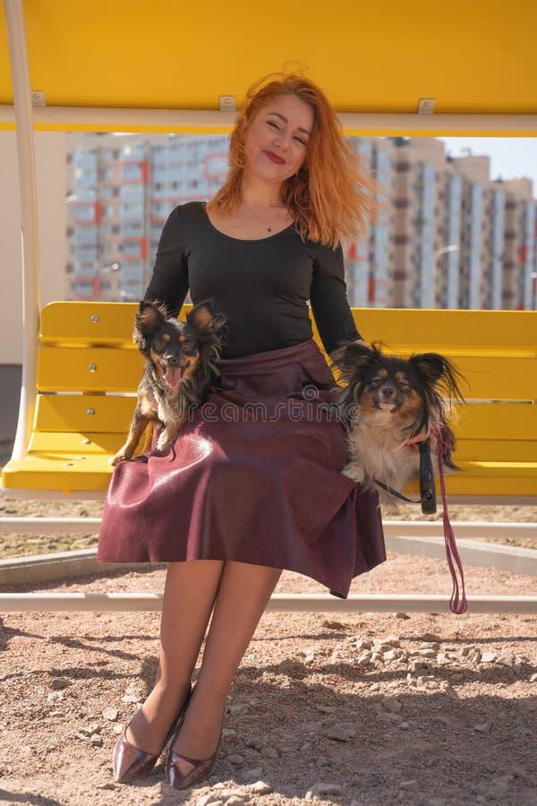 Mujer redheaded feliz bonita con dos pocos perros en el banco amarillo del verano fotos de archivo libres de regalías