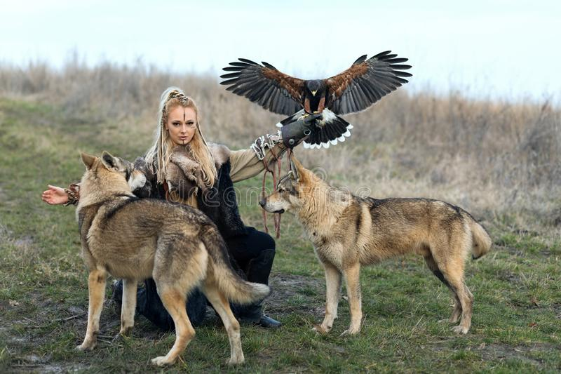 Mujer septentrional hermosa del guerrero en la ropa de vikingo con los lobos y el unicinctus de Harris Hawk Parabuteo fotos de archivo libres de regalías