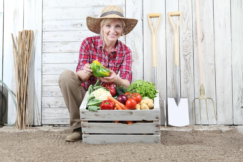 Mujer sonriente en huerto con la caja de madera por completo de verduras en el fondo blanco de la pared con las herramientas imágenes de archivo libres de regalías