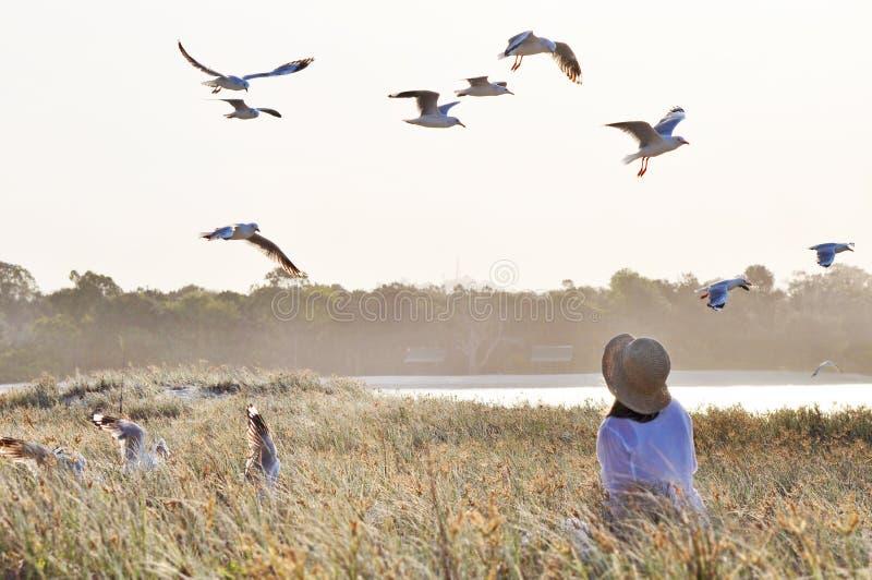 Mujer suave soñadora en campo de hierba y volar de los pájaros imagenes de archivo
