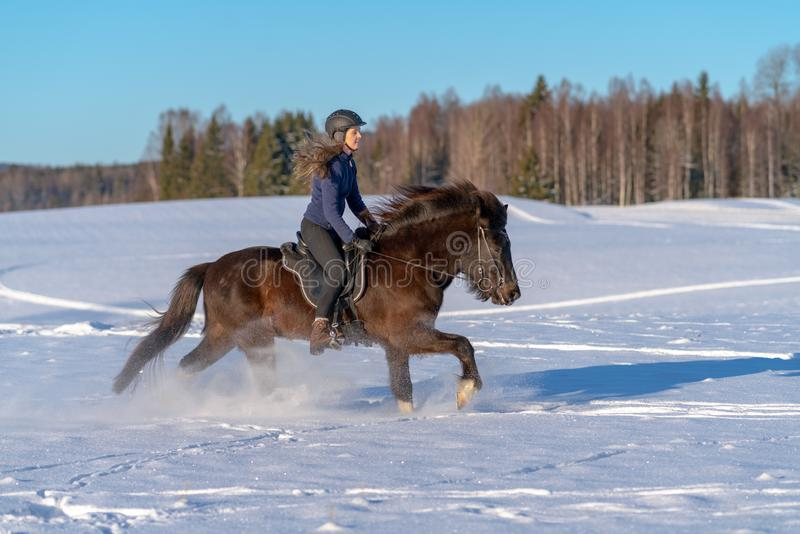 Mujer sueca joven que disfruta de un paseo en su caballo islandés en invierno foto de archivo