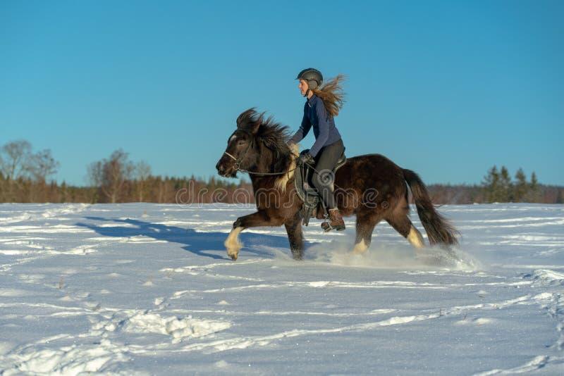 Mujer sueca joven que disfruta de un paseo en su caballo islandés en nieve profunda fotos de archivo libres de regalías
