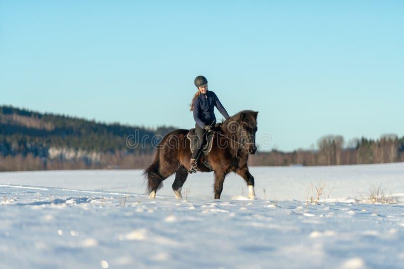Mujer sueca joven que monta su caballo islandés en un campo nevado fotos de archivo libres de regalías