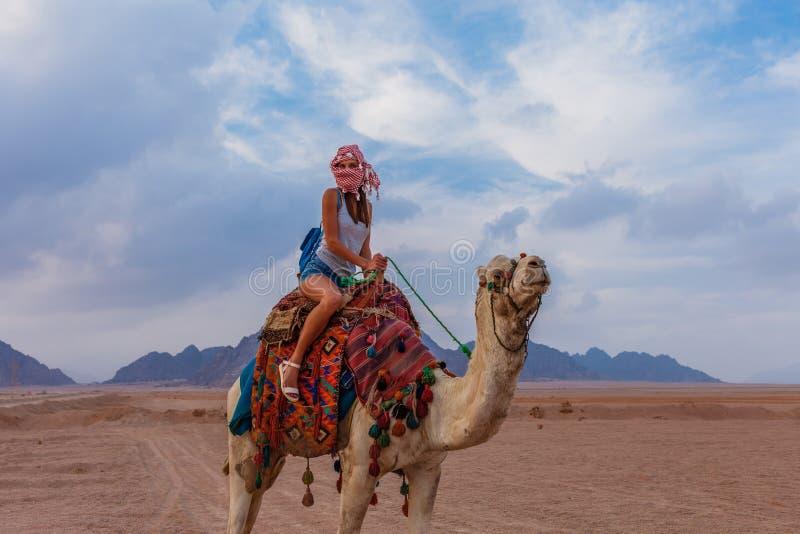 Mujer turística en ropa árabe tradicional con el camello en el desierto de Sinaí, Sharm el Sheikh, península del Sinaí, Egipto foto de archivo